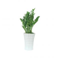 관엽식물-금전수-112