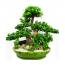 웰빙식물-가지마루(팬다)-4