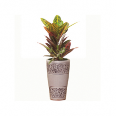관엽식물-크로톤-23